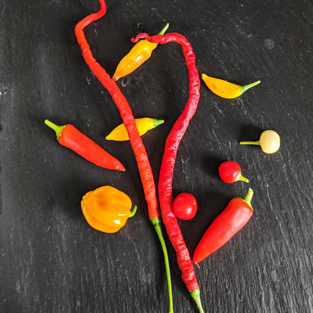 Bunte Chilis auf schwarzem Hintergrund.